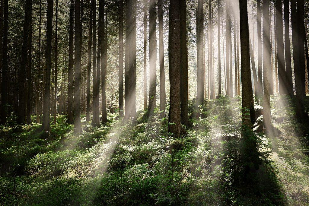 sinar matahari di hutan